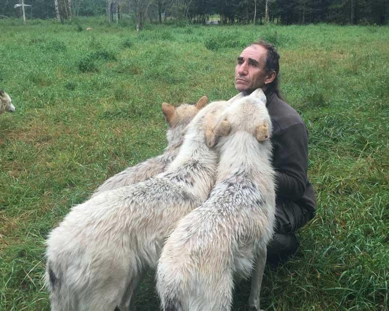 wolf park quebec